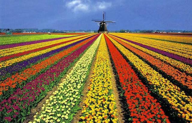 Голландия. Страна цветов, воды и ветряных мельниц