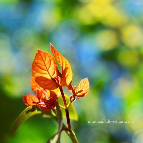 Красивые фото с deviantart.com