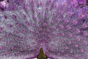 Лавандовый цвет. Подборка фотографий