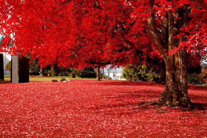 Красивые фото природы, Красивые фотографии, Чудеса природы,