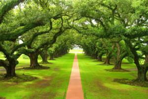 Красивые фото природы: разноцветные деревья