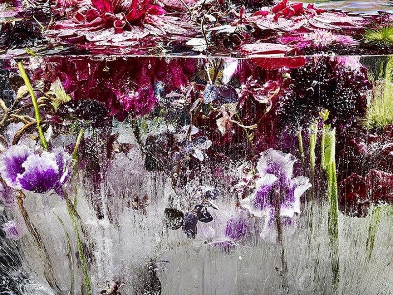 Замороженные цветы Кэндзи Шибата